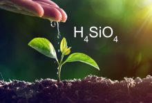 Photo of Top Benefits One Should Know About Silicon on Plant Growth