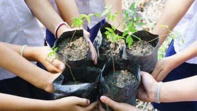 "Photo of How ""free"" Is ""Planting Trees For Free?"""