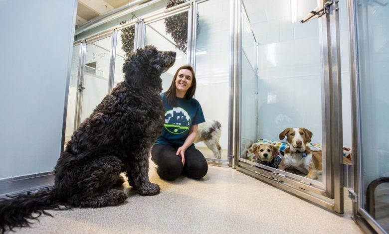 Photo of What are the pros and cons of dog boarding school?